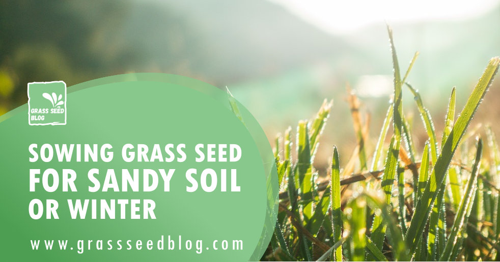 Sowing Grass Seed for Sandy Soil or Winter
