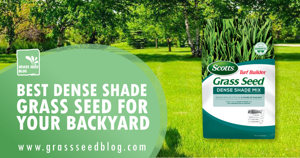 Best Dense Shade Grass Seed For Your Backyard