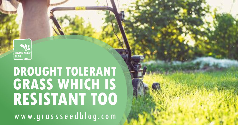Drought Tolerant Grass Which Is Resistant Too