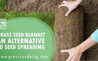 Grass Seed Blanket – An Alternative To Seed Spreading