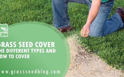 Grass Seed Cover – The Different Types and How to Cover