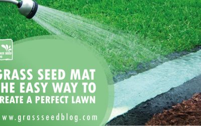 Grass Seed Mat – The Easy Way To Create A Perfect Lawn