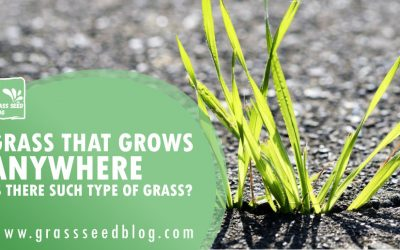 Grass That Grows Anywhere – Is There Such Type Of Grass?