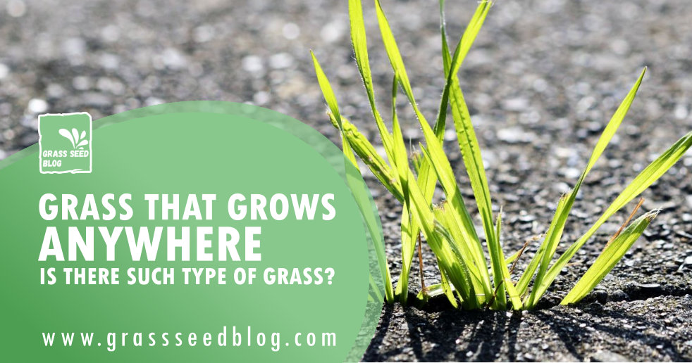 Grass That Grows Anywhere - Is There Such Type Of Grass