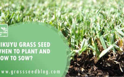 Kikuyu Grass Seed – When To Plant and How To Sow?