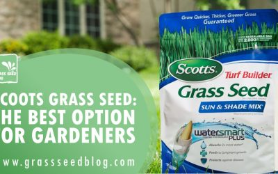 Scotts Grass Seed: The Best Option for Gardeners