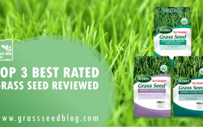 Top 3 Best Rated Grass Seed Reviewed
