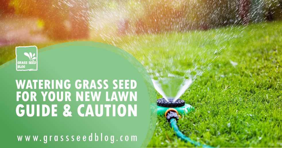 Watering Grass Seed For Your New Lawn – Guide & Caution