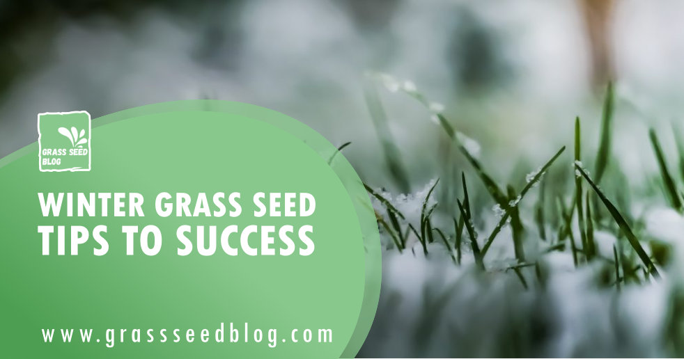 Winter Grass Seed - Tips To Success