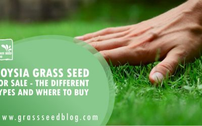 Zoysia Grass Seed for Sale – The Different Types and Where To Buy