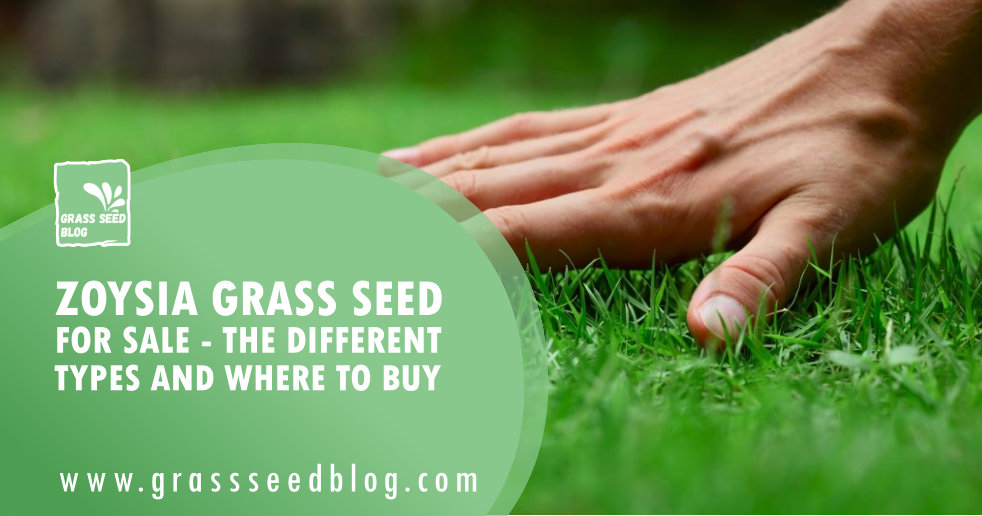 Zoysia Grass Seed for Sale - The Different Types and Where To Buy
